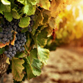 chianti-wine-winetasting-bottle