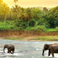 sri-lanka-nature-sea